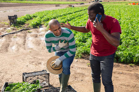 African american farmer calling doctor for hispanic worker on field