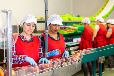 Latino women sorting peaches at fruit storage