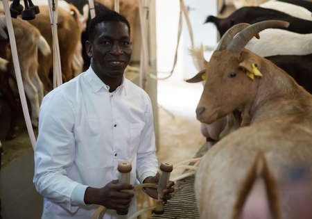 African american farmer milking a goats with an automatic milk machine