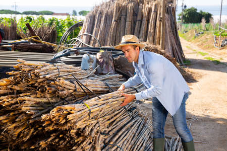 Young farmer preparing bamboo stems for making support trellises
