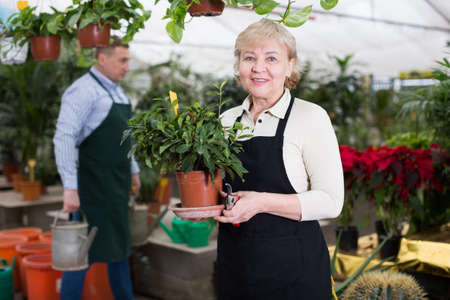 Woman gardener is taking care of flowers with secateur