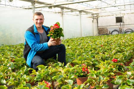 Florist examining begonia seedlings