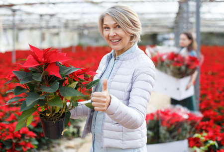 Happy woman with poinsettia in glasshouse
