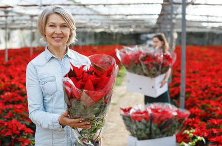 Smiling woman with flowering Poinsettias Stock Photo