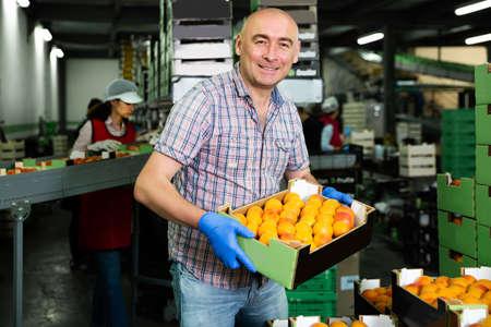 worker loading boxes of apricots Foto de archivo