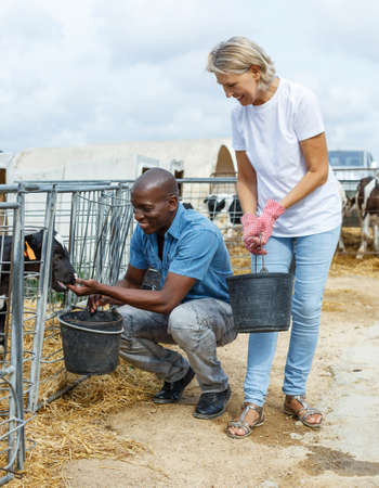 woman with assistant feeding calves