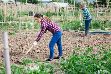 Latina woman tilling soil with hoe in garden Stock Photo