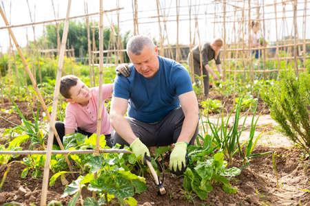 Preteen boy helping father work in vegetable garden