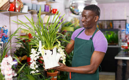 Florist inspecting potted plants Stock Photo