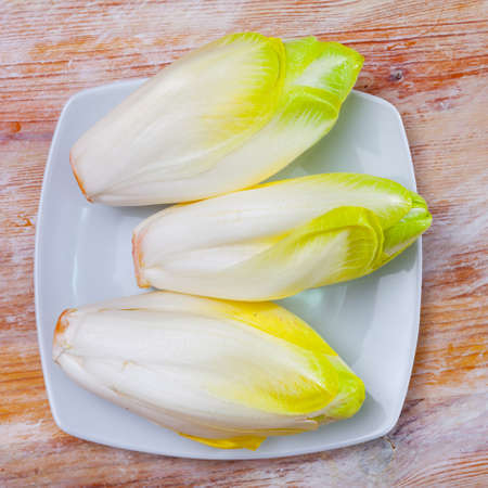 Head of belgian endive chicory on wooden table