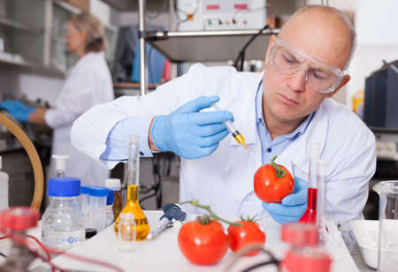 Scientist injecting reagent into tomatoes Foto de archivo