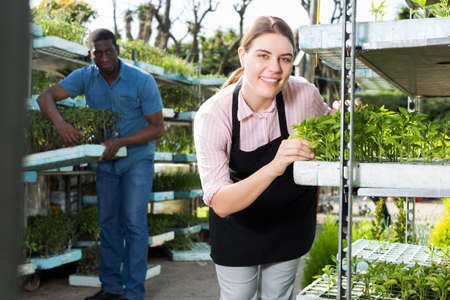 growers checking seedlings while working in hothouse