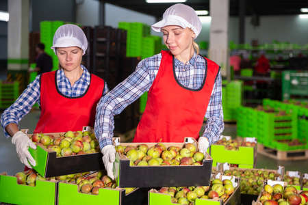 Women during packaging pears to crates