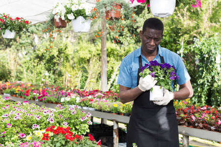 Florist man working in greenhouse