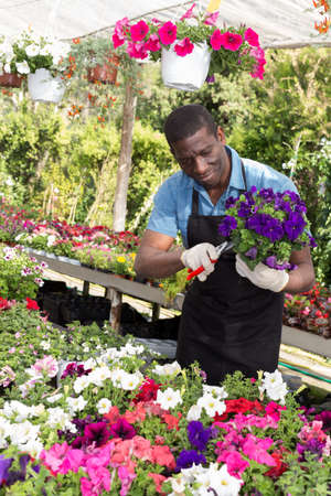 Man arranging flowers in glasshouse