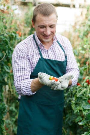 Farmer demonstrating crop cherry tomatoes