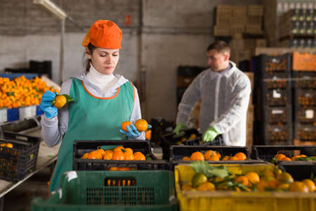 Man and woman working on tangerines sorting line