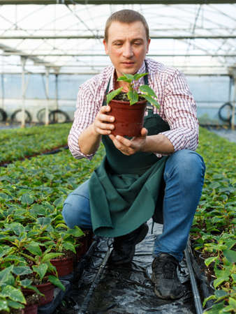 Farmer demonstrating flowerpot with young plant