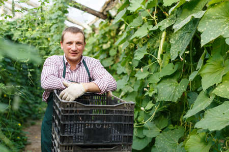 Man horticulturist in apron with crate standing near marrow seedlings in garden