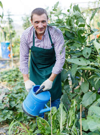 Man gardener standing and watering seedlings with watering pot