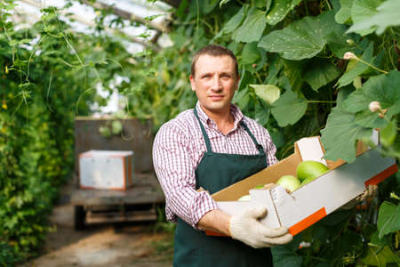 Portrait of male gardener in apron holding crate with zucchinis