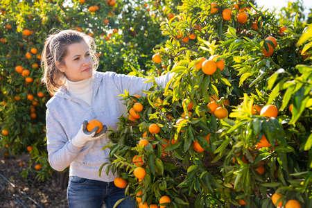Portrait of cheerful female worker picking mandarins in basket on farm Archivio Fotografico