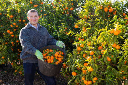 Portrait of cheerful male worker with basket harvesting mandarins on farm