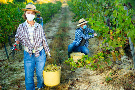 Farm workwoman in protective mask carrying bucket with grapes