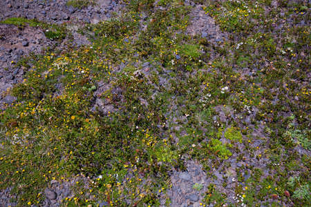 Plants of the Andes