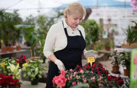 Woman gardener is taking care of flowers near plants