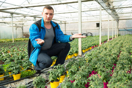 Man controlling quality of tomato seedlings