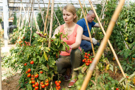 Woman with husband checking tomato plants