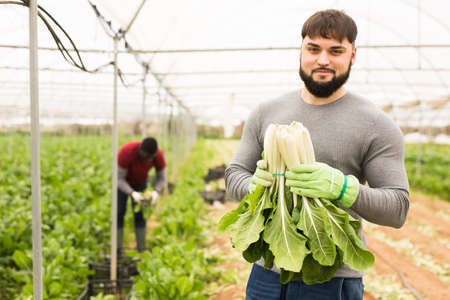 Successful young horticulturist with green chard
