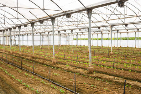 Industrial greenhouse. High quality photo