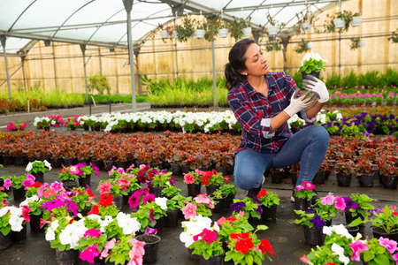Cheerful woman florist holding potted flowers in orangery