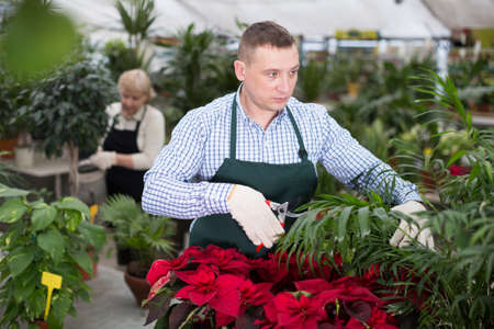 Man gardener is taking care of flowers with secateur Stock Photo