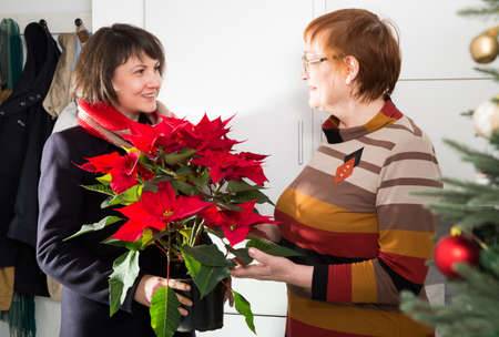 Adult daughter with poinsettia visiting mother