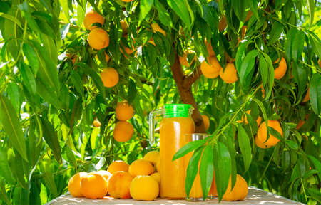 Jug of freshly squeezed peaches juice with peaches in an outdoor setting during summer