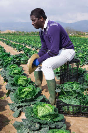 Tired afro american farmer sitting on a plastic box