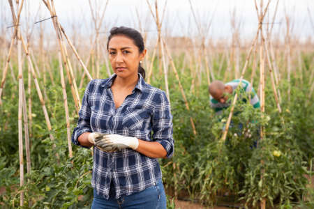 Latino woman farmer posing on tomato farm 免版税图像