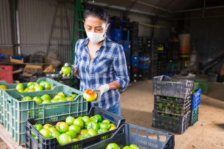 Woman in mask sorting tomatoes in warehouse
