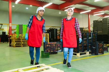 Women warehouse workers carrying boxes with peaches