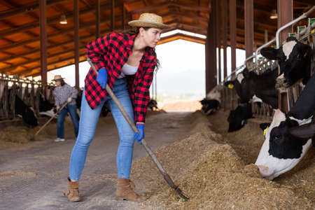 Portrait of a young concentrated girl working in a cowshed