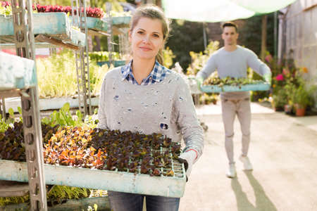 Two workers look after flowers in orangery