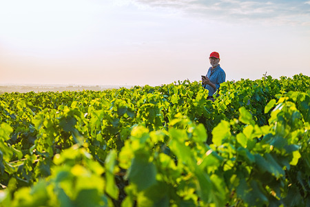 A french winegrower in his vines at sunset Stock Photo
