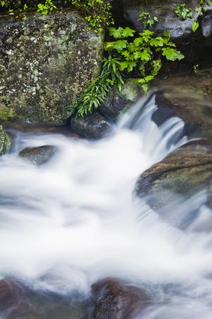 maleza: Arroyo en las piedras