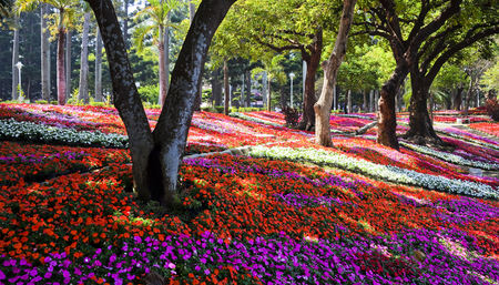 Scenic View of Colourful Flowerbeds in Tainan Park, Taiwan.
