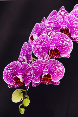 Orchid flowers wish black background Stock Photo