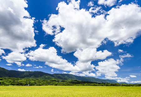Rice field swith Blue sky and cloud in Taitung, Taiwan
