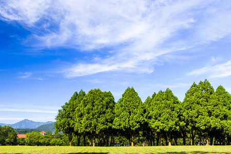 Green trees in beautiful park with blue sky Stock Photo